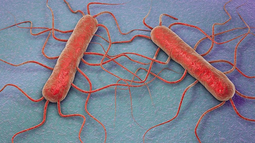Listeria_Listeriosis_Biotecnologia_Maria_Iranzo_Biotec