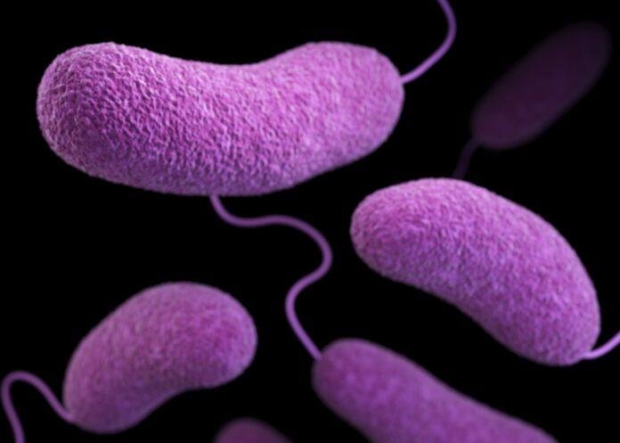 Bacterias_Transporte_Farmacos_Tumores_Cancer_Maria_Iranzo_Biotecnologia